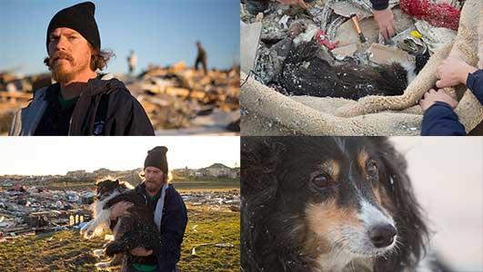 Perro superviviente en el tornado de Illiniois