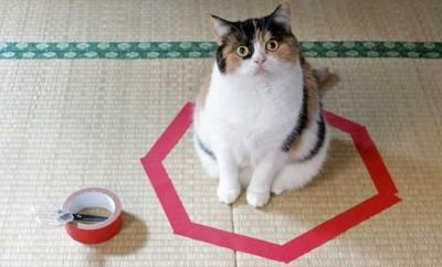 Gatos en círculos