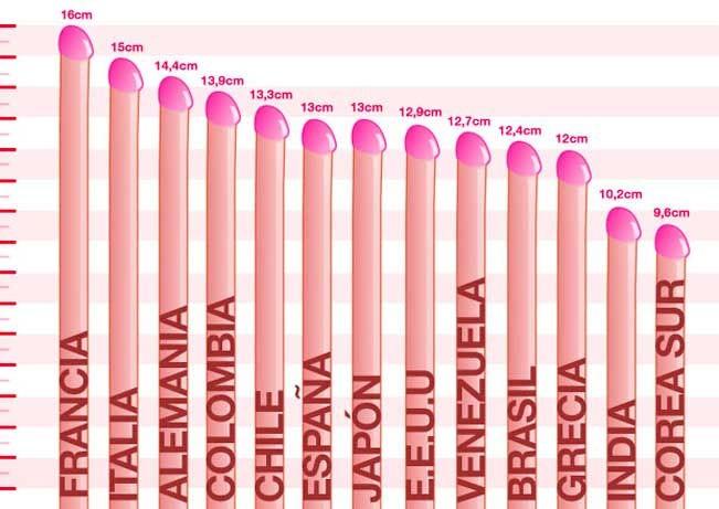 medida normal de un pene erecto